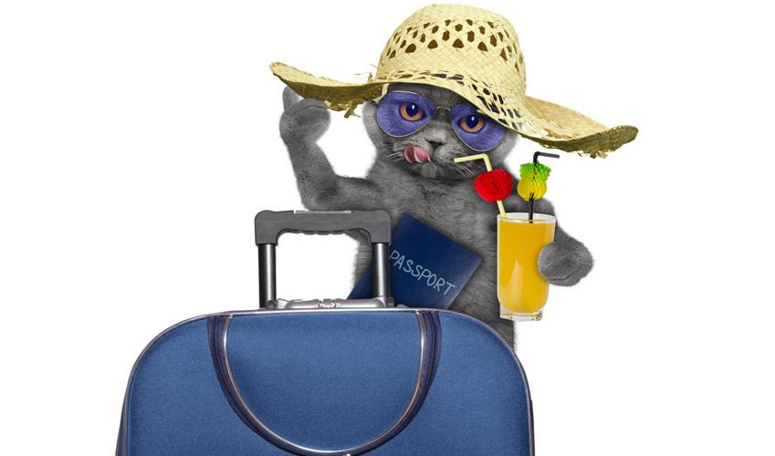 Chat en vacances : partir en vacance avec son chat