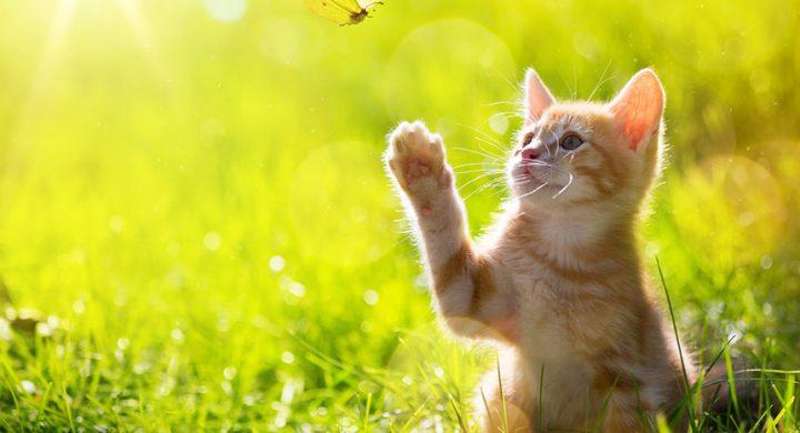 Rendre son chat heureux : blog chat , entretien