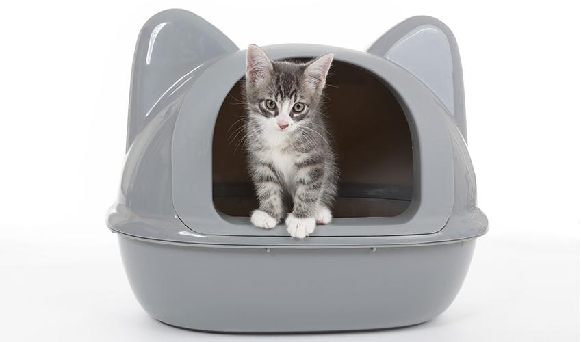 Chat malpropre : comportement du chat