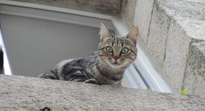 Chat parachute : pourquoi les chat aiment la hauteur