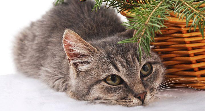 Chat et sapin de Noël : 5 astuces pour préserver votre arbre de Noel de votre chat