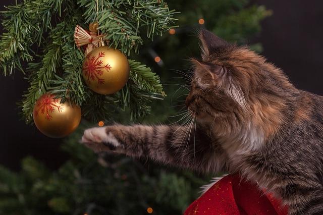 Chat et sapin : Eloigner son chat du sapin de Noël