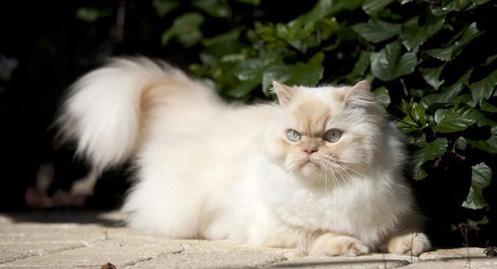 Chat sauvage : Mon chat n'est pas sociable, chat solitaire