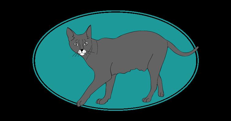 Chausie chat animal races : tout savoir sur les chats