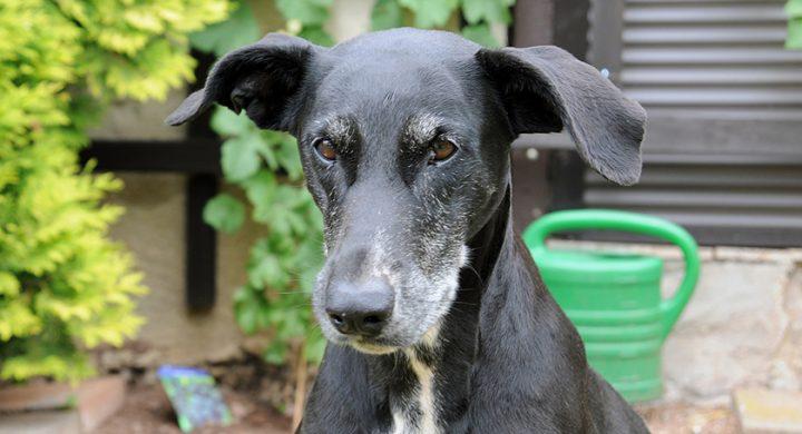 Chien âgé : Comment prendre soin de son chien agé ?