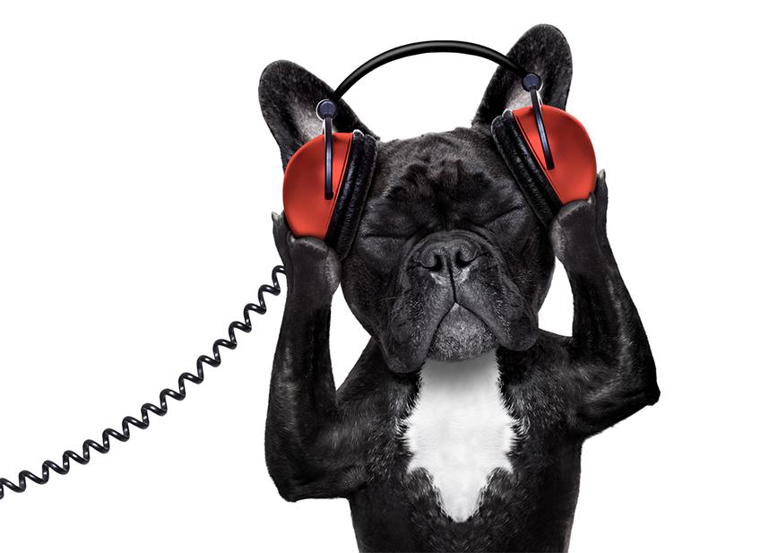 Chien, chat la musique dans actualité Assur O' Poil