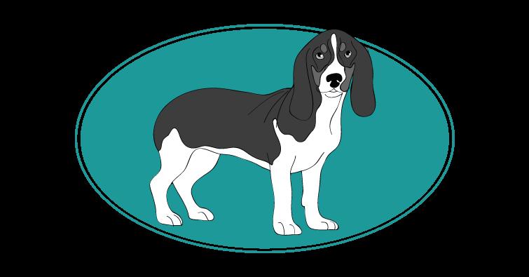 Chien courant bernois : toutes les races de chien, chien races