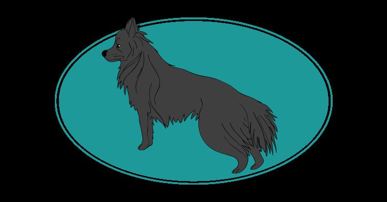 chien-de-berger-des-pyrenees-a-face-rase-assuropoil