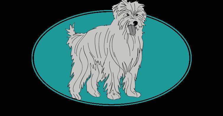 chien-de-berger-des-pyrenees-a-poil-long-assuropoil