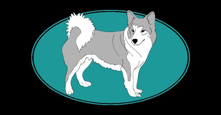 chien-de-berger-islandais-assuropoil