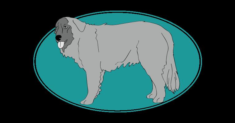 Chien de montagne portugais : Toutes les races de chien, chien races