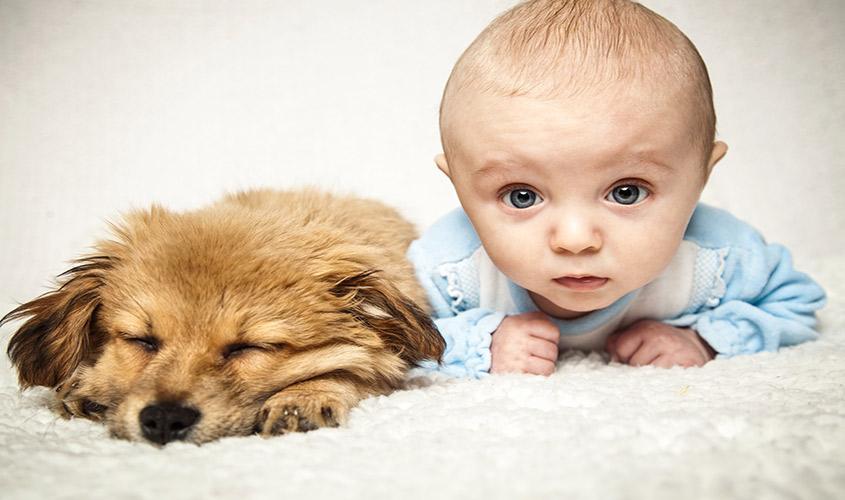 Chien et bébé : les bienfaits des chiens sur les bébés