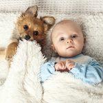 Chien et nouveau né : Découvrez nos conseils pour faciliter la cohabitation entre chien et bébé