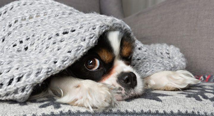 Santé du chien : 5 conseils pour le protéger du froid en hiver