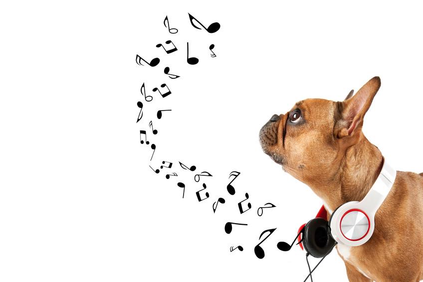 La musique pour chien : Acutalité Assur O' Poil