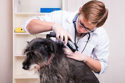 Le chien, les parasite : Bien-être