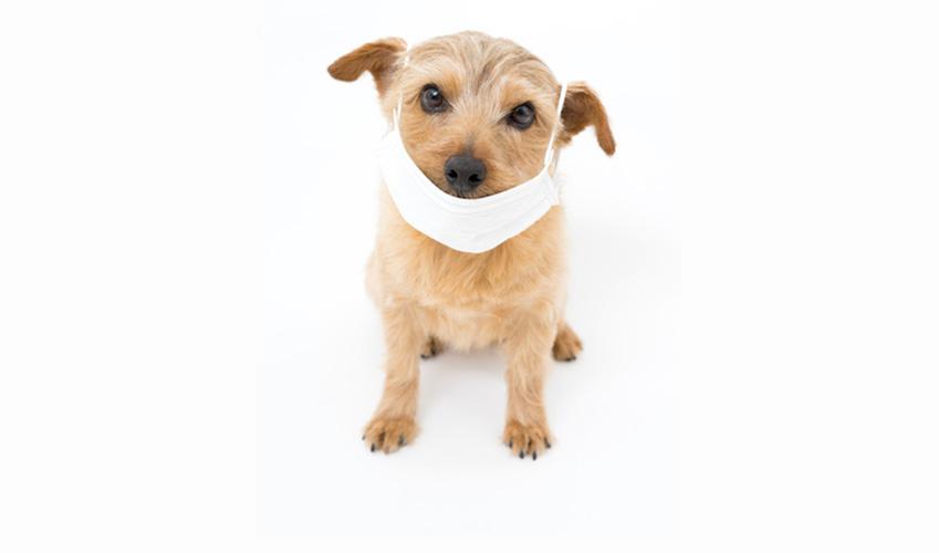 Actualité animaux : Les dangers de la pollution chez le chien