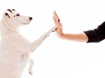 Le chien doit avoir ses vaccins à jour pour sa santé