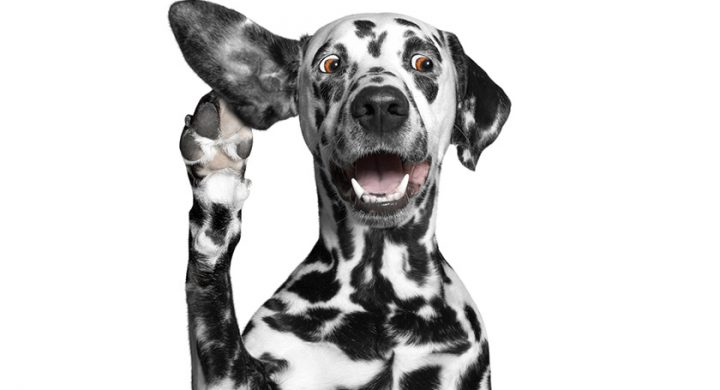 Chien sourd : Comment dresser un chien sourd