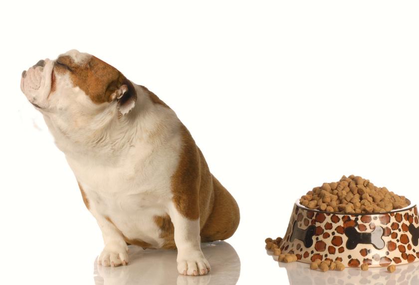 Regime pour chien contre l'obésité