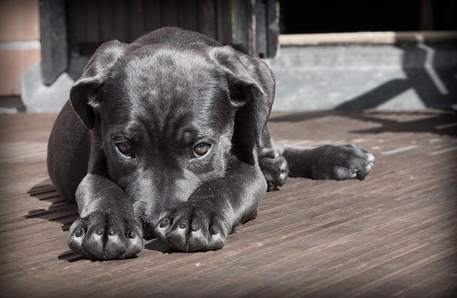 Chien craintif, chien timide, comment rendre confiant mon chien