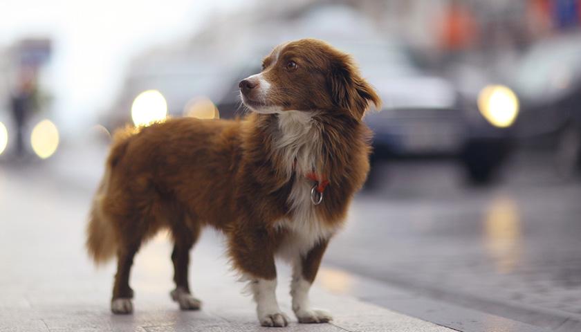 Chien trouvé : que faire si vous trouvez un chien ?