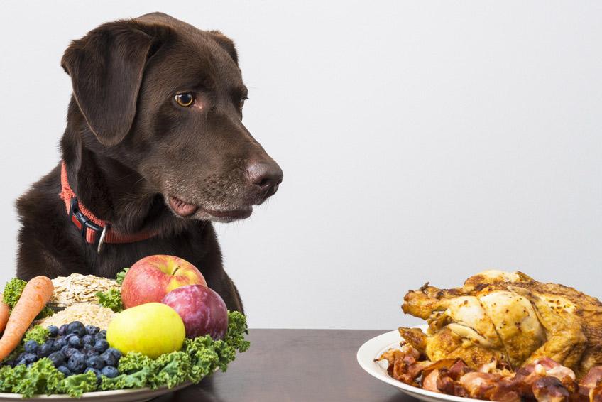 Chien végétarien : Alimentation