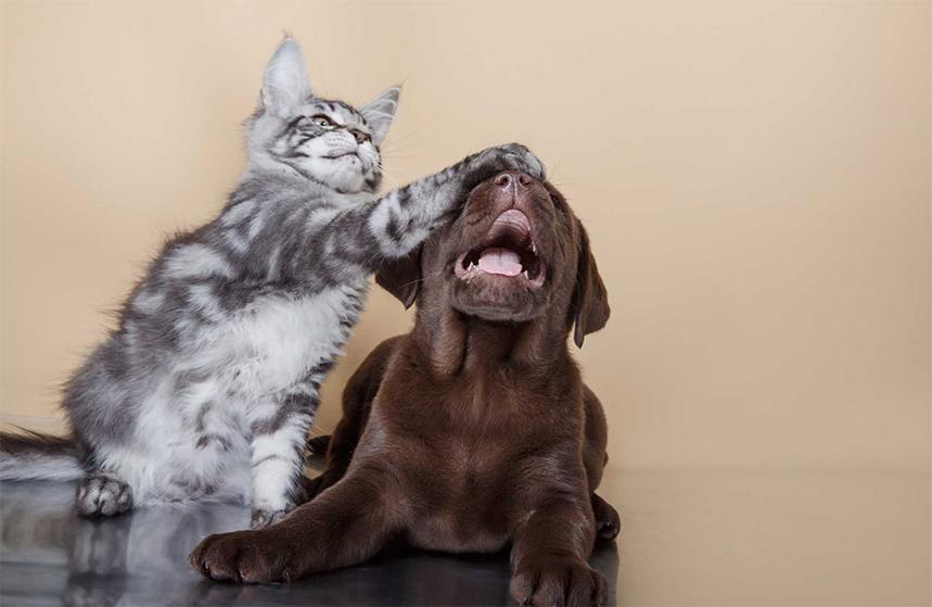 Cohabitation entre chien et chat : que faire