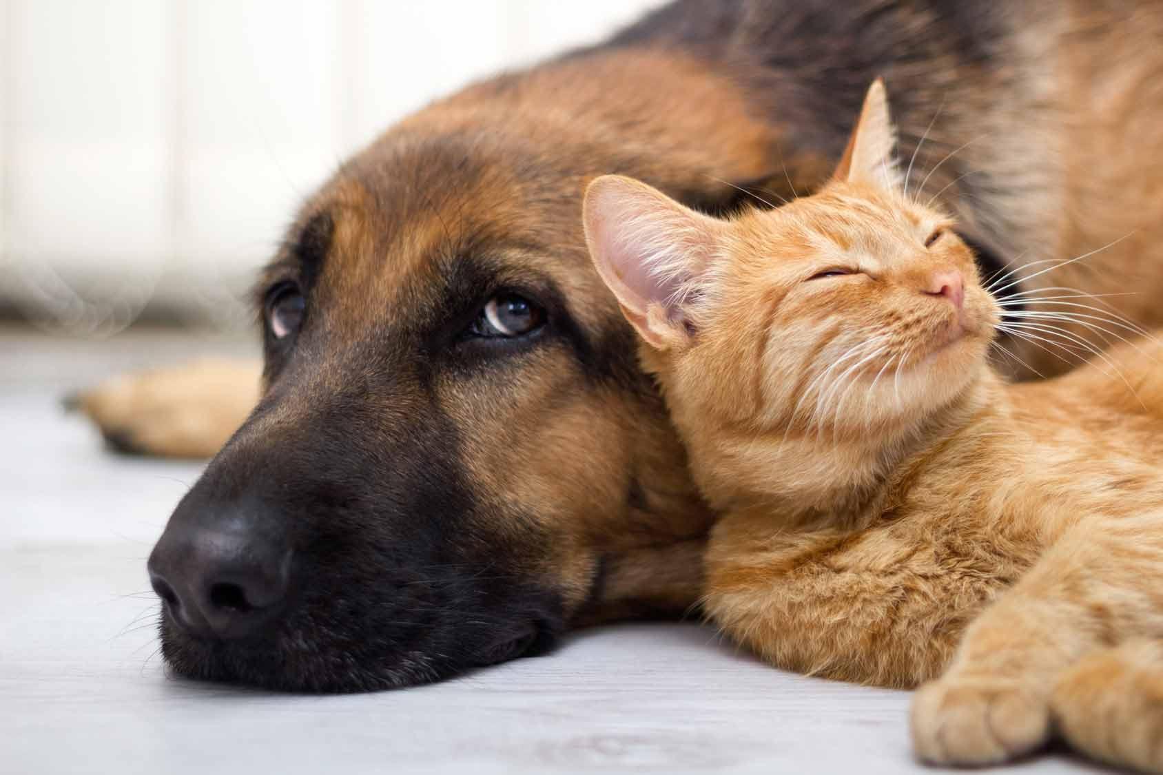 Cohabitation chien et chat : chien et chat qui s'aiment