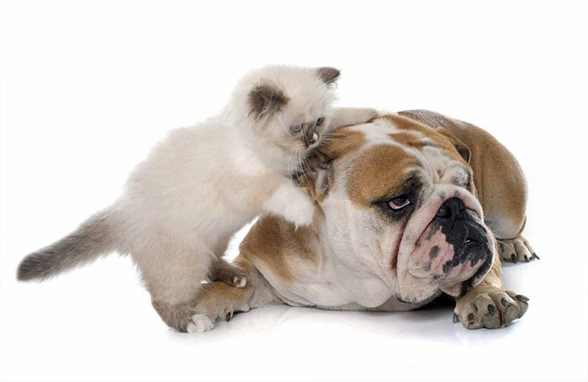 Cohabitation chien et chat : comment vivre avec un chien et un chat