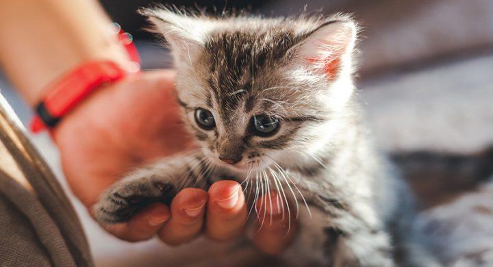 Comment accueillir un chaton