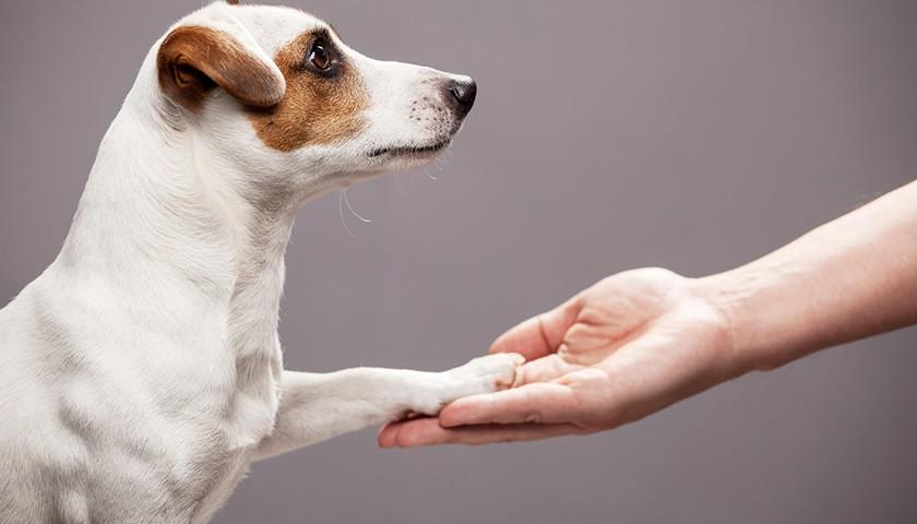 Comment bien eduquer son chien, education chien