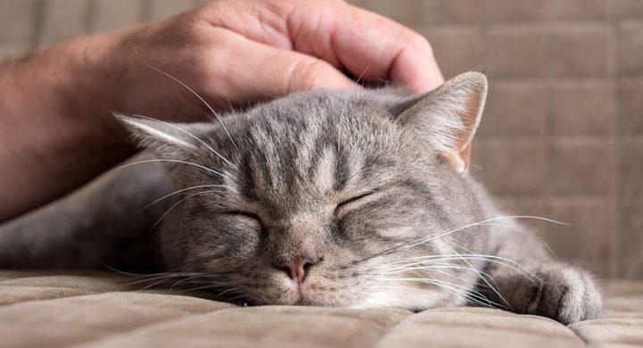 Caresser un chat, comment caresser un chat