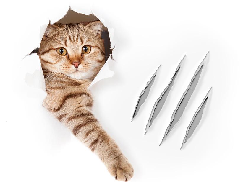 Comment couper griffes chat: Entretien