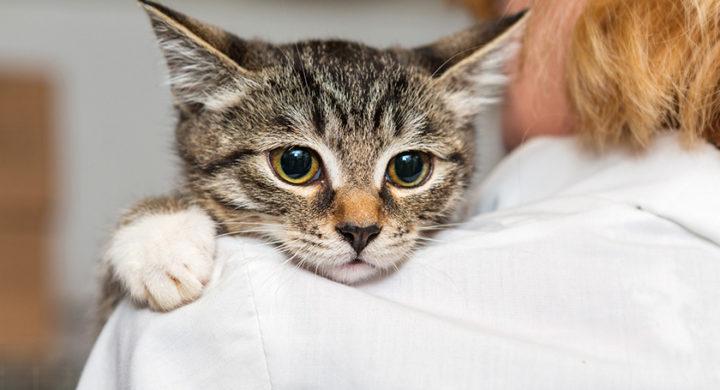 Comment faire le deuil de son chat