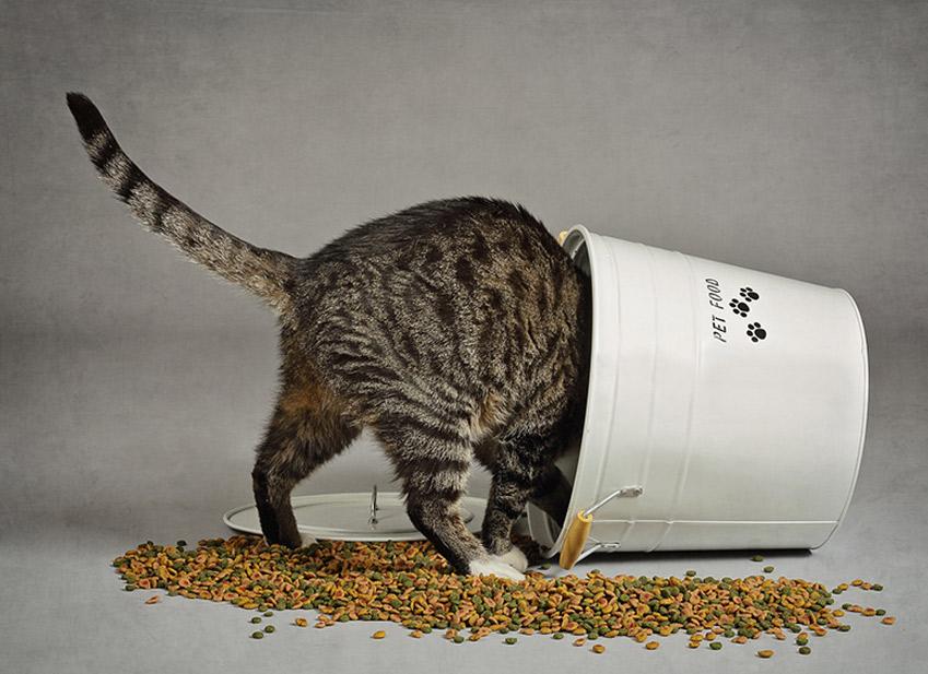 Comment nourrir un Chat : Nourriture