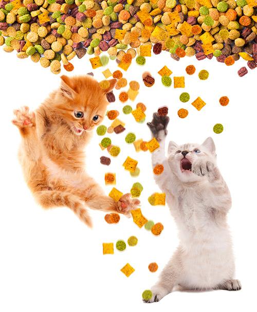 Comment nourrir Un Chat: Nourriture