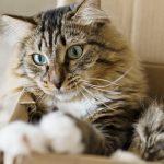 Comment occuper son chat : mon chat s'ennuie, comment y remedier