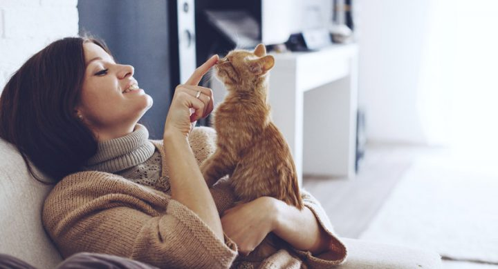 Education chat : Comment punir un chat, gronder un chat