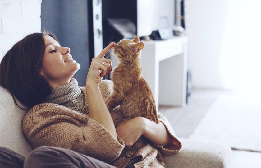 Education chat : Comment punir un chat, gronder un chat
