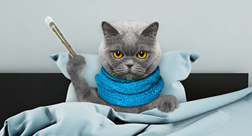 Comment Savoir si mon chat à la fièvre