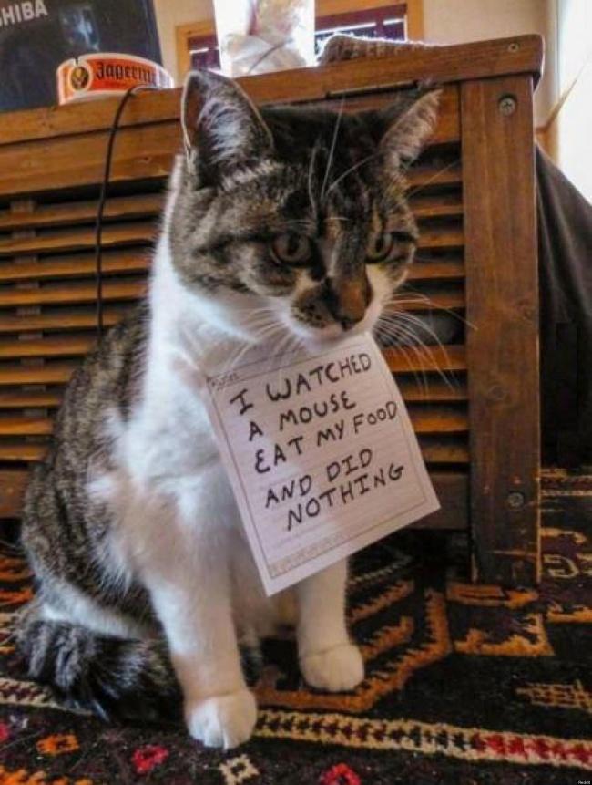 Comportement chat : 10 bêtises de chat qu'il faut pardonner