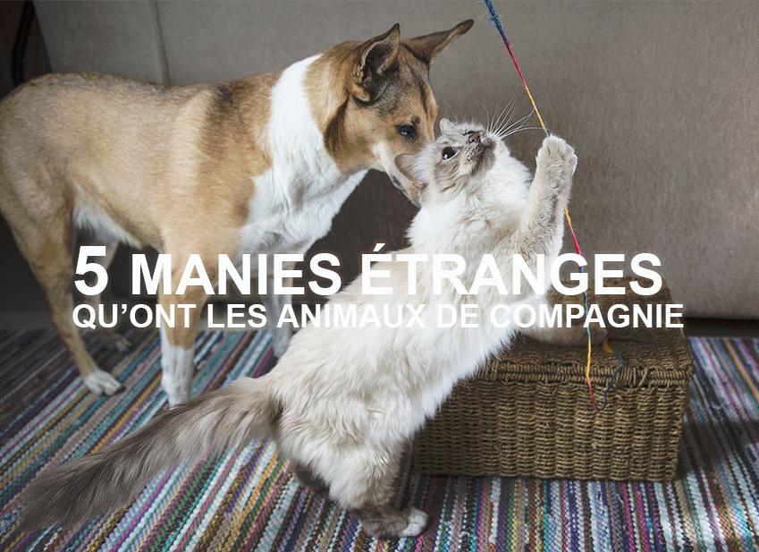 Actualité animaux : Comportement des animaux, 5 manies étranges qu'ont les chiens et les chats