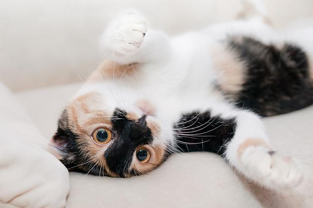 Chat caresse, comment caresser un chat