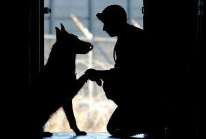 Comportement du chien : Parler chien, parler à son chien