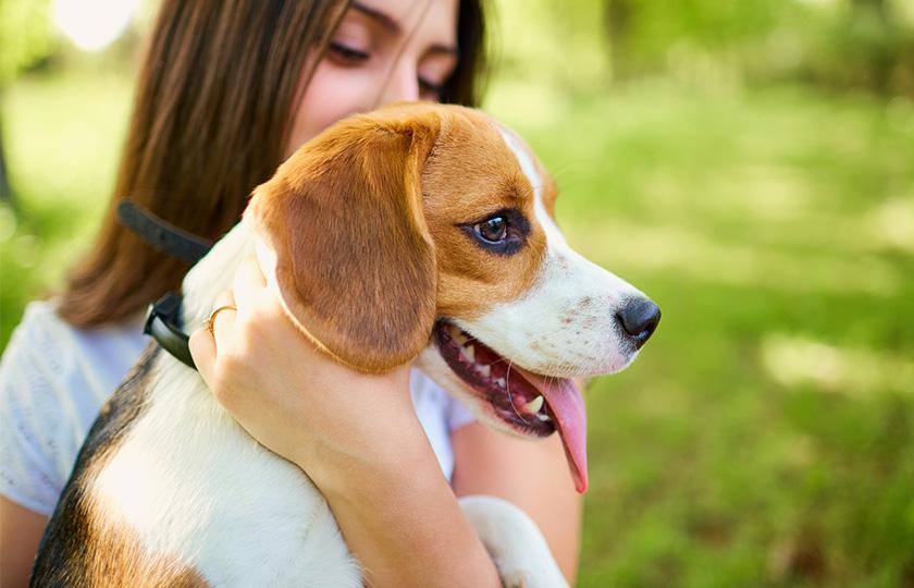 Comprendre son chien : Comment parler à son chien, geste, attitude