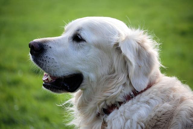 Education chien : conseil pour voyager avec son chien