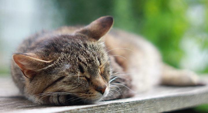 Constipation chat : Comment traiter la constipation chez le chat