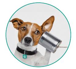 Contactez -nous assurance animaux Assur O' Poil
