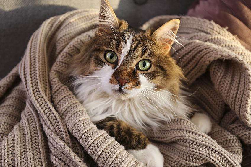 Contraception pour chat : Les méthodes de contraception chez le chat